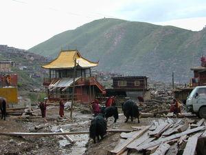 Yaks on the street near a pagoda style building.