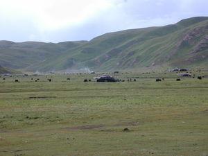 Yaks grazing near nomad tents.