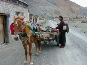 A Tibetan woman standing on the road beside her horse-drawn cart.