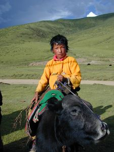 A young nomad boy riding a yak.