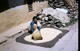 Drying rice in the courtyard