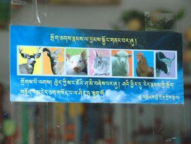 Sign promoting vegetarianism in Lhagang. (Nyarong, Kham)